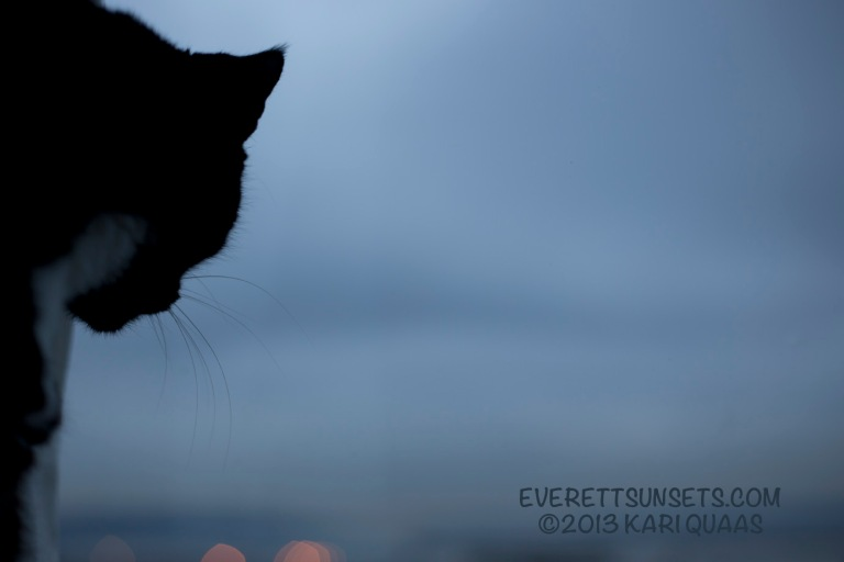 A cat looking at the gray, lackluster sunset.